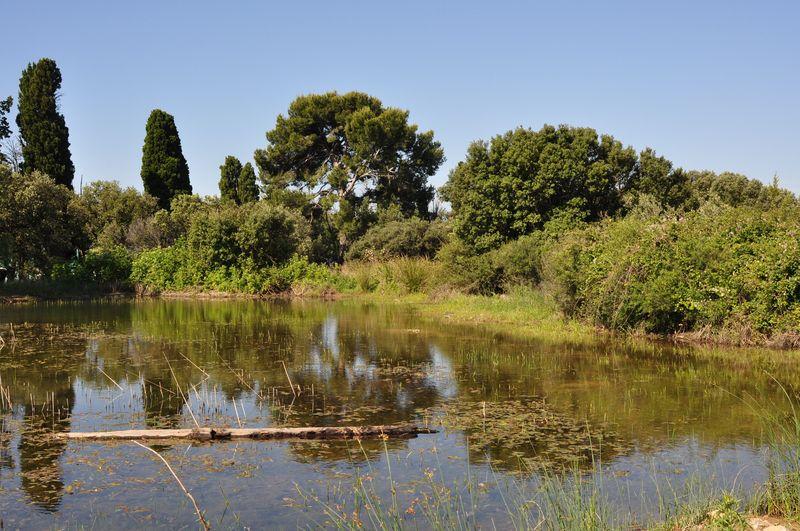 Habitat de reproduction du Pélobate cultripède - Mas de Cocagne (Saint-Martin-de-Crau - 13)