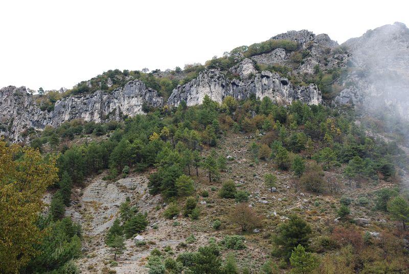 Milieu rupestre favorable à l'Hydromante de Strinati, vallée du Careï, Alpes-Maritimes