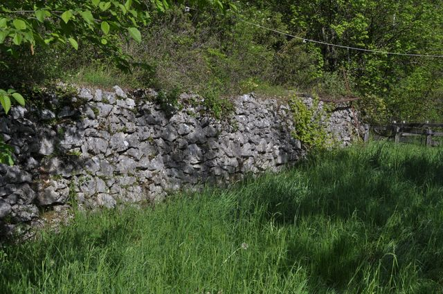 Muret de soutènement abritant une population d'Hydromante de Strinati, Alpes-Maritimes