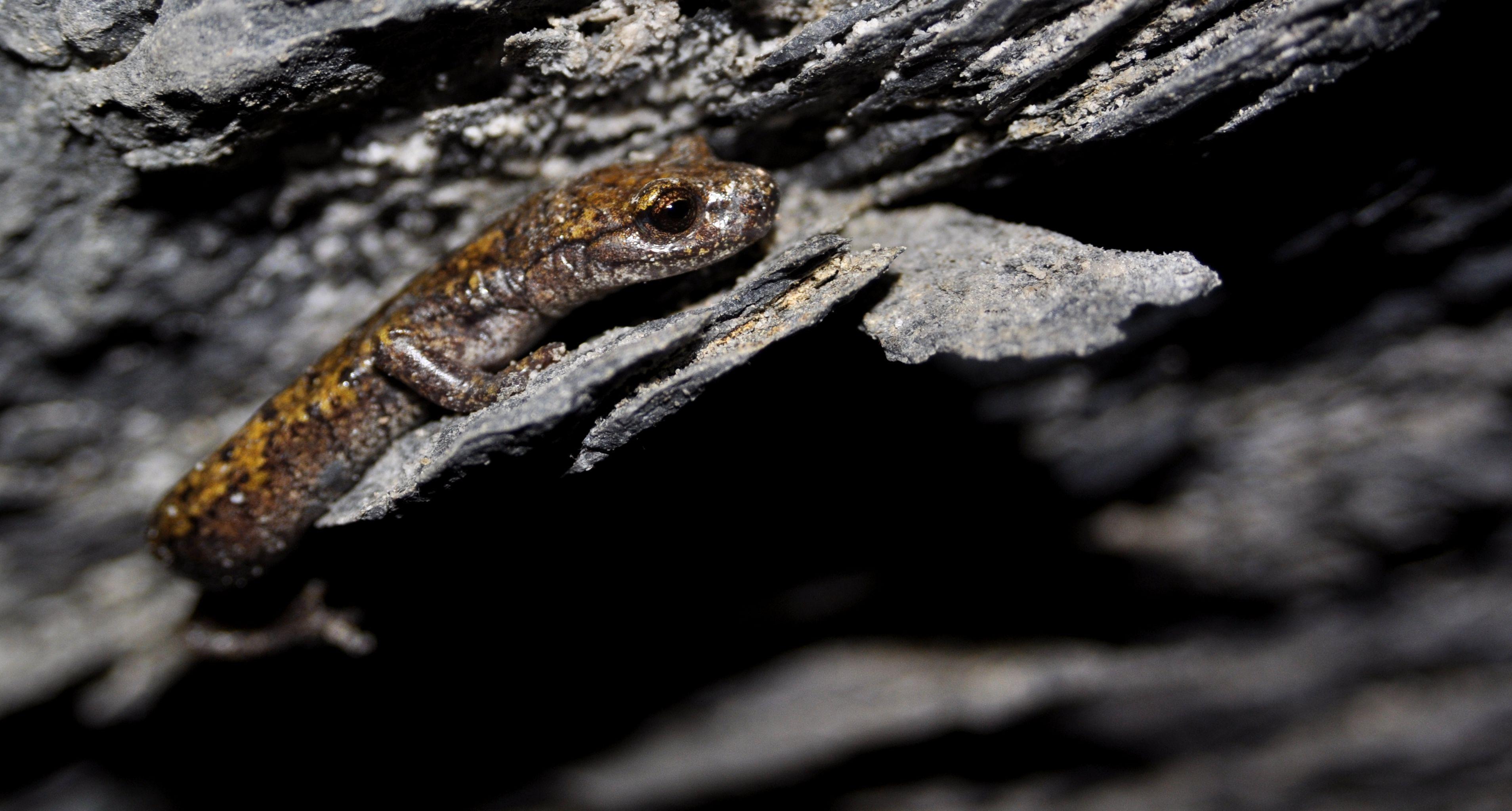 Hydromante de Strinati dans une cavité, La Brigue, Alpes-Maritimes